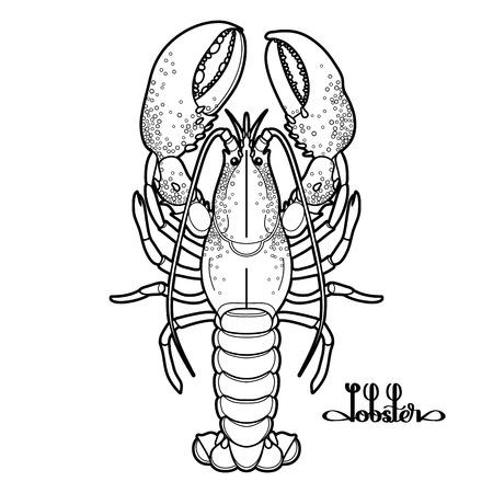 ライン アート スタイルで描かれたグラフィックス ベクター ロブスター。白い背景に分離された海と海の生き物。平面図です。魚介類の要素。ぬり