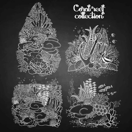 ocean plants: Coral reef design collection in line art style.  Sea and ocean plants and rocks isolated on chalkboard