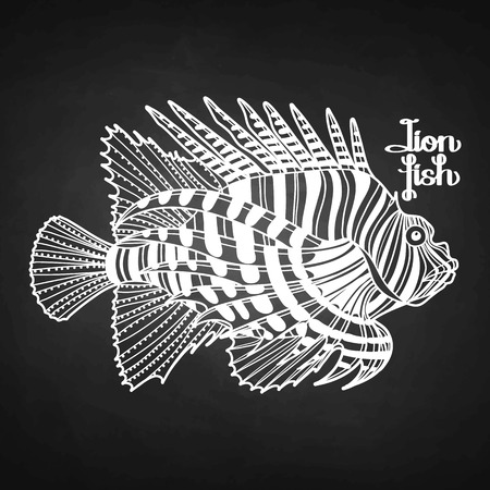 zebra lionfish: Graphic vector lion fish isolated on chalkboard. Sea and ocean creature in black and white colors