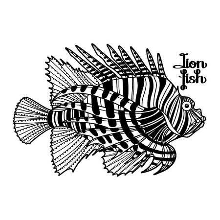 zebra lionfish: Graphic vector lion fish isolated on white background. Sea and ocean creature in black and white colors. Coloring book page design Illustration