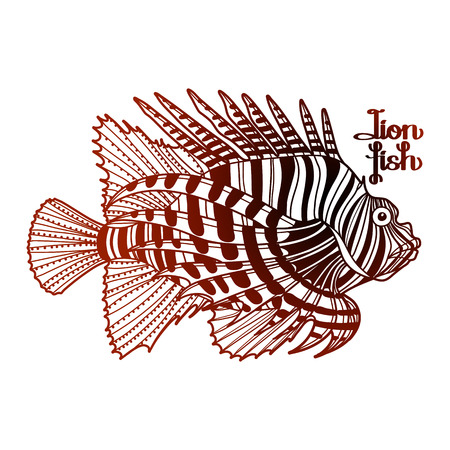 zebra lionfish: Graphic vector lion fish isolated on white background. Sea and ocean creature in black and red colors. Coloring book page design