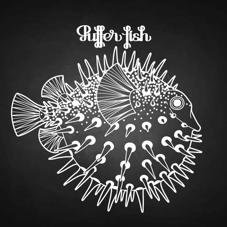 puffer: Graphic puffer fish isolated on chalkboard. Sea hedgehog.