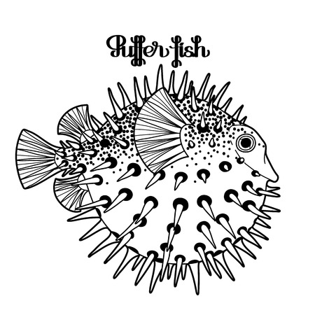 blowfish: Graphic puffer fish isolated on white background. Sea hedgehog. Illustration