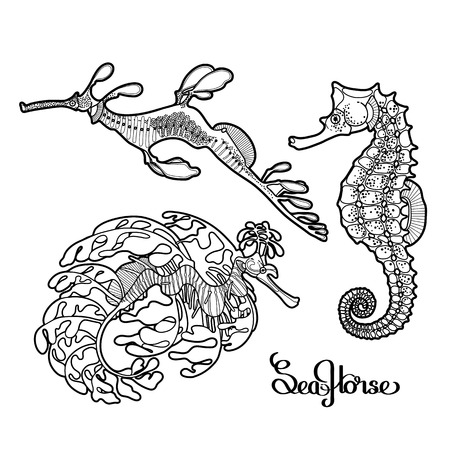 leafy sea dragon graphic vector seahorse collection drawn in a line art style ocean