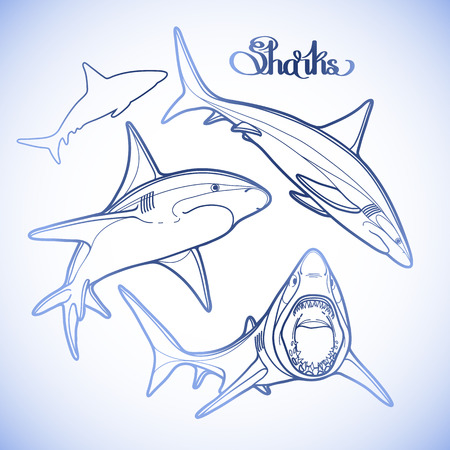 oceanic: Graphic collection of vector sharks drawn in line art style. Oceanic whitetip shark in blue colors. Illustration