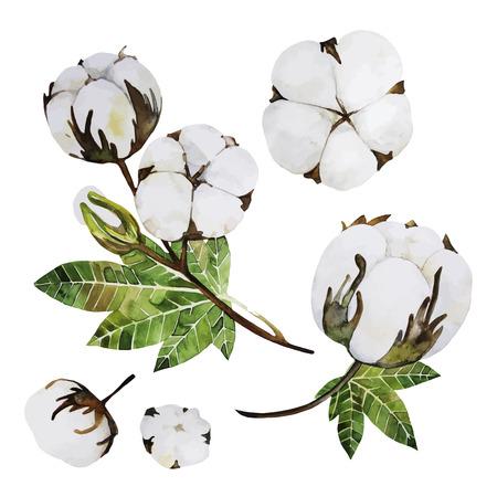 Watercolour katoen collectie geïsoleerd op een witte achtergrond. Bloemontwerpelementen Vector Illustratie