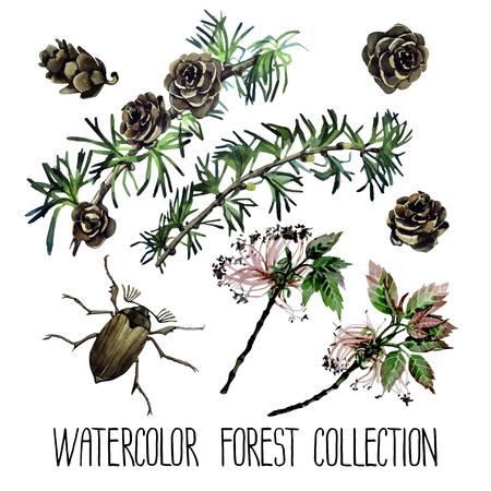 larch: Watercolor forest set. Insects among larch cones and foliage isolated on white background