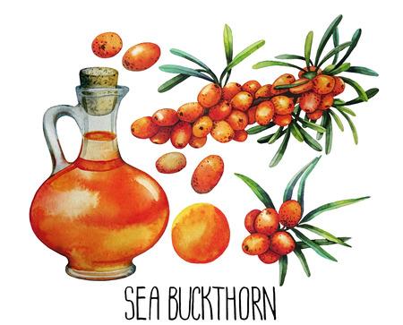 Aquarelle argousier pot d'huile et de baies isolé sur fond blanc Banque d'images
