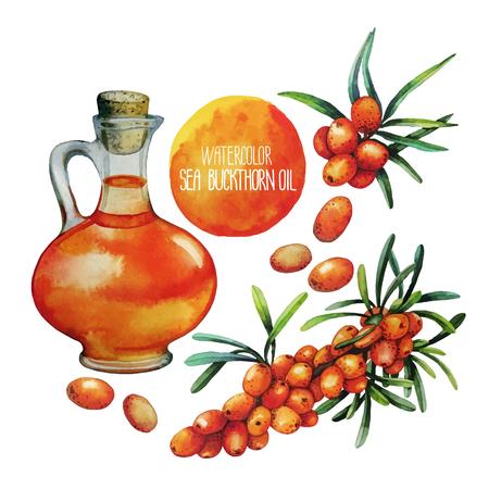 argousier: Aquarelle argousier pot d'huile et de baies isolé sur fond blanc Illustration