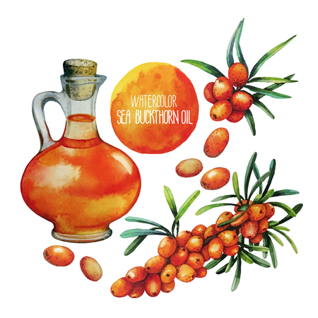 Watercolor sea buckthorn oil jar and berries isolated on white background