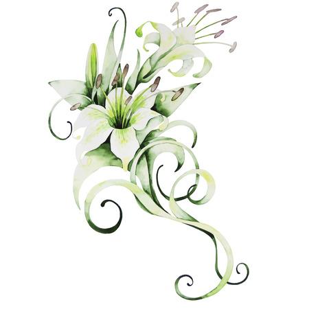 Akwarele białe lilie na białym tle. Wektor kwiatowy bukiet