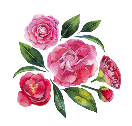 Watercolor camellia set isolated on white background