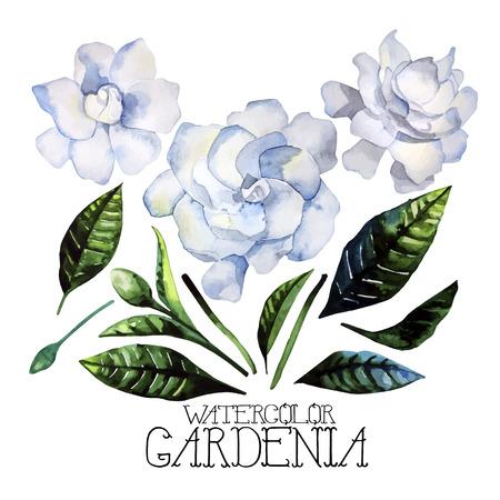 Ensemble Aquarelle gardenia isolé sur fond blanc. Vector floral conception Banque d'images - 56287269