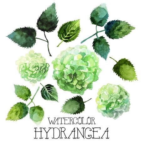 Ensemble d'hydrangea d'aquarelle isolé sur fond blanc. Vector floral design Banque d'images - 56287270
