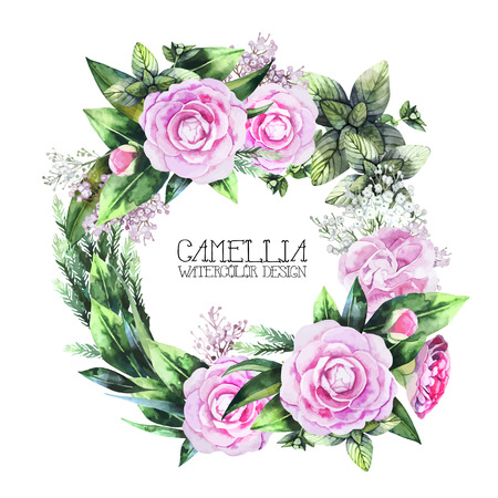 camellia: Watercolor  camellia wreath  isolated on white background. Vector floral design