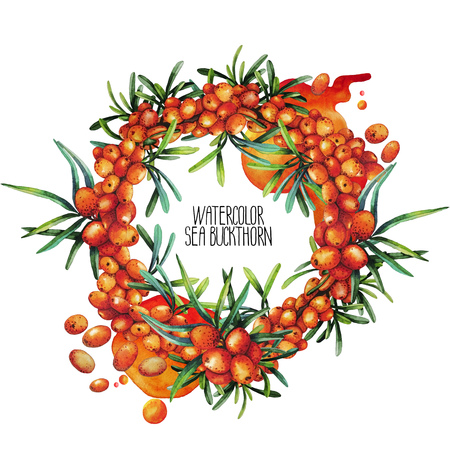 buckthorn: Sea buckthorn wreath. Watercolor design  isolated on white background