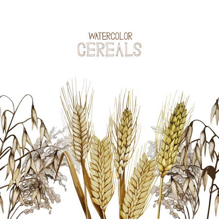 cereals: Collection of watercolor cereals. Vector endless design