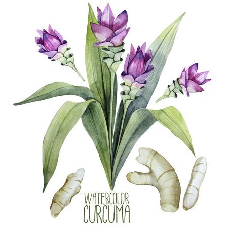 Lments Aquarelle Curcuma set isolé sur fond blanc. épices naturelles Banque d'images - 56287619