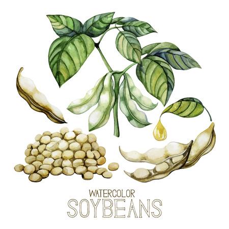 Ensemble de plantes aquarelle de soja isolé sur fond blanc. Les haricots, les feuilles et l'huile