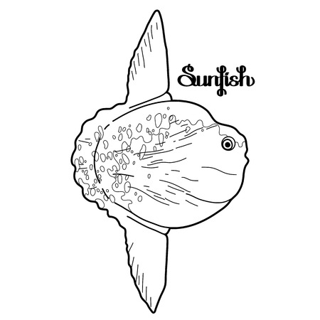 Graphic vector sunfish isolated on white background. Sea and ocean creature in black and white colors. Coloring book page design Vectores