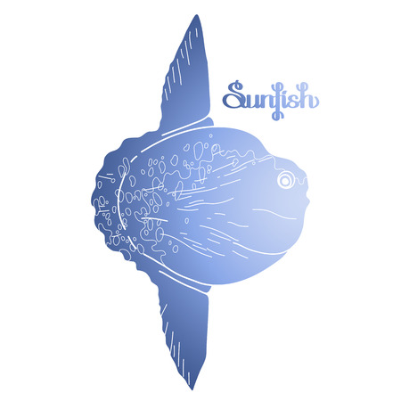 Graphic vector sunfish isolated on white background. Sea and ocean creature in blue colors. Coloring book page design