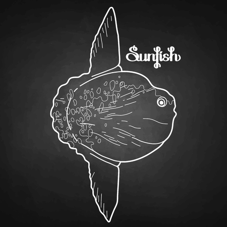 sunfish: Graphic vector sunfish isolated on chalkboard. Sea and ocean creature in black and white colors