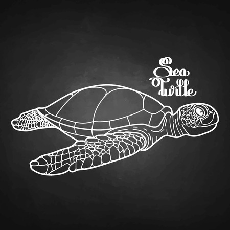 sea side: Graphic Hawksbill sea turtle drawn in line art style. Side view. Ocean vector creature isolated on chalkboard
