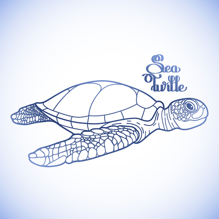sea side: Graphic Hawksbill sea turtle drawn in line art style. Ocean vector creature in blue colors isolated on white background. Side view. Coloring book page design Illustration