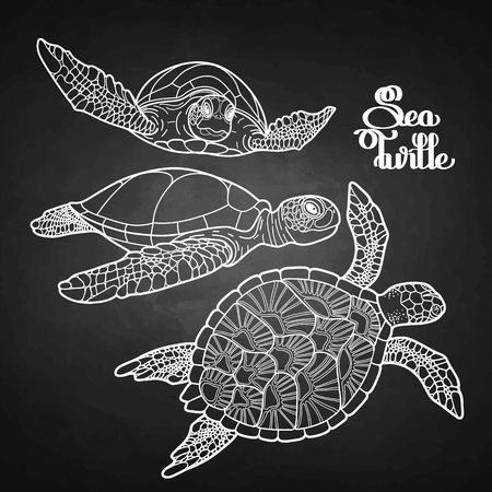 turtles: Graphic Hawksbill sea turtle collection drawn in line art style.  Ocean vector creatures isolated on chalkboard