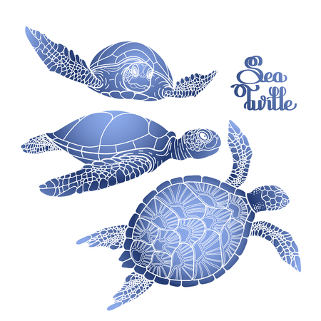 Graphic Hawksbill sea turtle collection drawn in line art style. Ocean vector creatures in blue colors isolated on white background. Coloring book page design Vectores