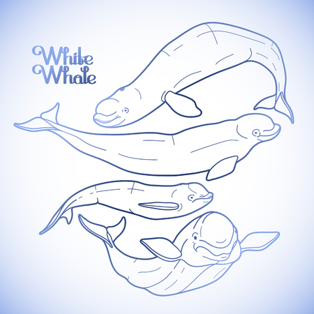 sea creature: Graphic beluga whale collection. White whale. Sea creature isolated on white background.  Vector ocean mammal. Coloring book page design for adults and kids Illustration