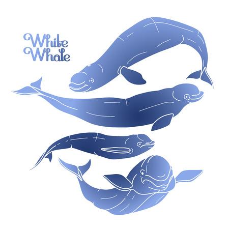 Beluga graficzny kolekcja wieloryb. Biały wieloryb. Morskie stworzenie na białym tle. Wektor oceanu ssak