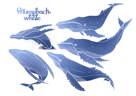 humpback: Collection of graphic humpback whales isolated on white background.  Giant sea and ocean creatures in blue colors