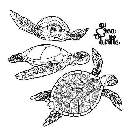 Graphic Hawksbill sea turtle collection drawn in line art style. Ocean vector creatures isolated on white background. Coloring book page design