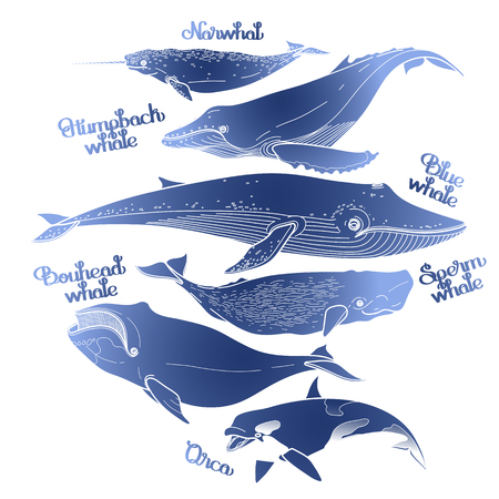 cachalot: Collection of graphic whales isolated on white background. Vector giant sea and ocean creatures in blue colors