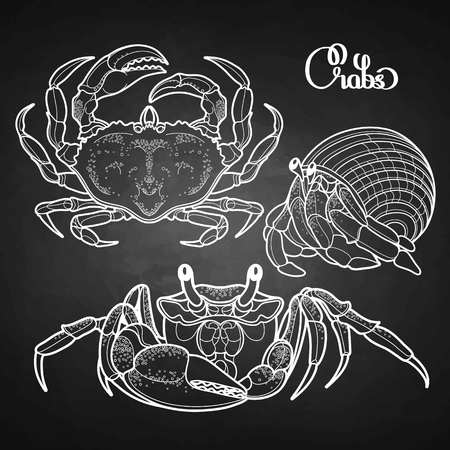 hand line fishing: Graphic vector crab collection drawn in line art style. Sea and ocean creature isolated on chalkboard. Top view. Seafood element. Coloring book page design Illustration