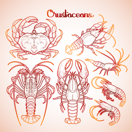 spiny: Graphic crustaceans collection drawn in line art style. Sea and ocean creatures isolated on white background. Coloring book page design
