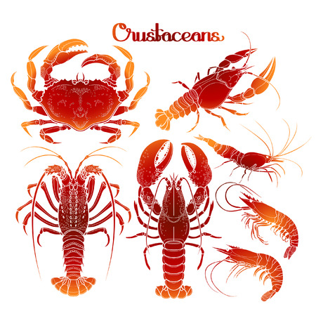 crustaceans: Graphic crustaceans collection drawn in line art style. Sea and ocean creatures isolated on white background. Coloring book page design