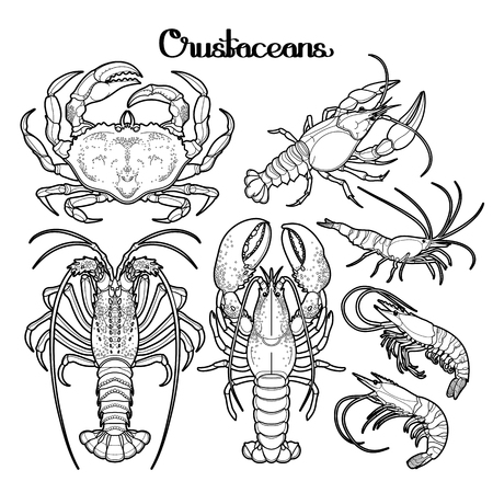 creatures: Graphic crustaceans collection drawn in line art style. Sea and ocean creatures isolated on white background. Coloring book page design