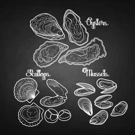 Graphic vector mussels, oysters and scallops drawn in line art style in black and white colors. Sea and ocean clams isolated on chalkboard.  Seafood ingredients for menu design