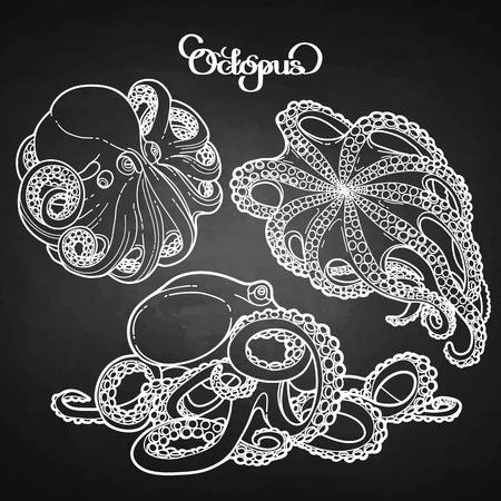 Graphic octopus drawn in a line art style. Sea vector collection. Ocean creatures isolated on chalkboard.