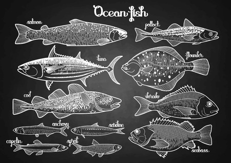 Graphic ocean  fish collection drawn in line art style. Saltwater fish for seafood menu. Sea and ocean creatures isolated on chalkboard