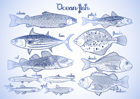 sturgeon: Graphic ocean  fish collection drawn in line art style. Saltwater fish for seafood menu. Sea and ocean creatures isolated on white background
