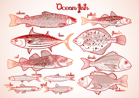 saltwater fish: Graphic ocean  fish collection drawn in line art style. Saltwater fish for seafood menu. Sea and ocean creatures isolated on white background