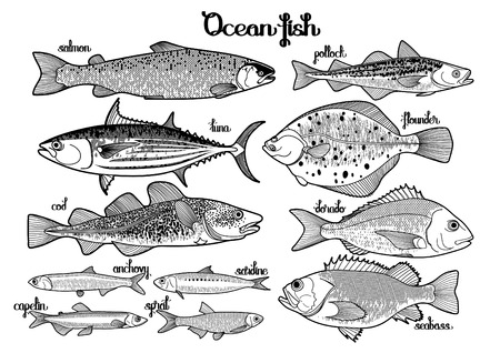 saltwater: Graphic ocean  fish collection drawn in line art style. Saltwater fish for seafood menu. Sea and ocean creatures isolated on white background
