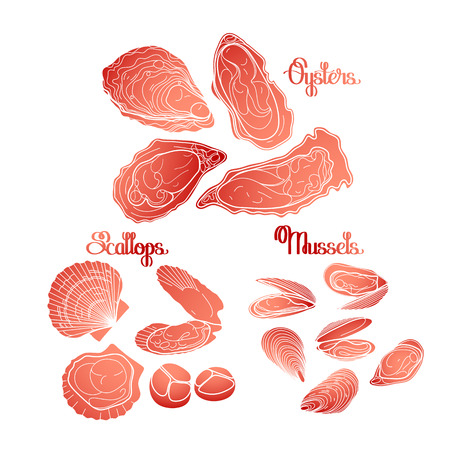 scallops: Graphic vector mussels, oysters and scallops drawn in line art style in coral and red colors. Sea and ocean clams isolated on white background. Seafood ingredients for menu design