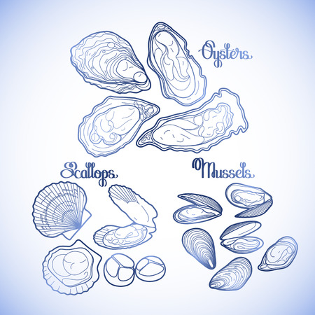 scallops: Graphic vector mussels, oysters and scallops drawn in line art style in blue colors. Sea and ocean clams isolated on white background. Ingredients for seafood menu. Coloring book page design