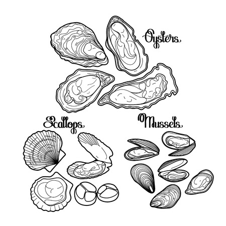 Graphic vector mussels, oysters and scallops drawn in line art style. Sea and ocean clams isolated on white background. Ingredients for seafood  menu. Coloring book page design