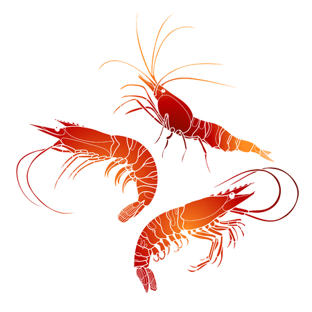 Graphic vector shrimps collection drawn in line art style. Sea and ocean creature isolated on white background in red colors. Seafood element. Coloring book page design