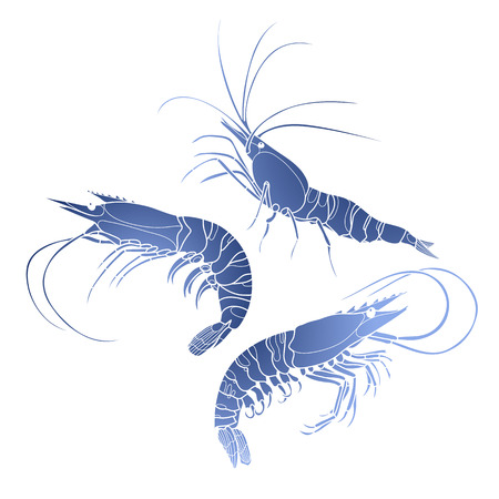 Graphic vector shrimps collection drawn in line art style. Sea and ocean creature in blue colors. Seafood element. Coloring book page design